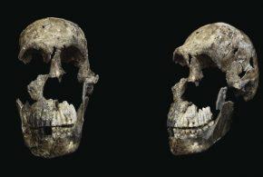 Face et profil de l'Homo Naledi - Crédit : Wits University/John Hawks