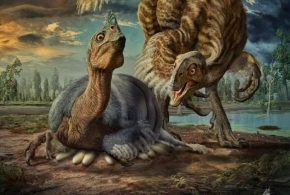 Les chercheurs rapportent la découverte de Beibeilong sinensis, une nouvelle espèce de dinosaure proche de l'Oviraptorosaure dans la province de Henan en Chine.