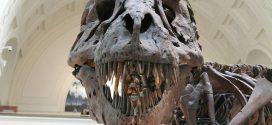 Le T-Rex avait une force de morsure de 3,6 tonnes