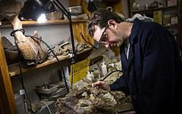 Des chercheurs russes rapportent la découverte des restes d'un animal inconnu connu comme le baidabatyr. Il fait partie des espèces des multituberculés dont la caractéristique particulière concerne la structure de leurs dents.