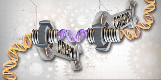 Le CRISPR-Cas9 provoque des centaines de mutations génétiques