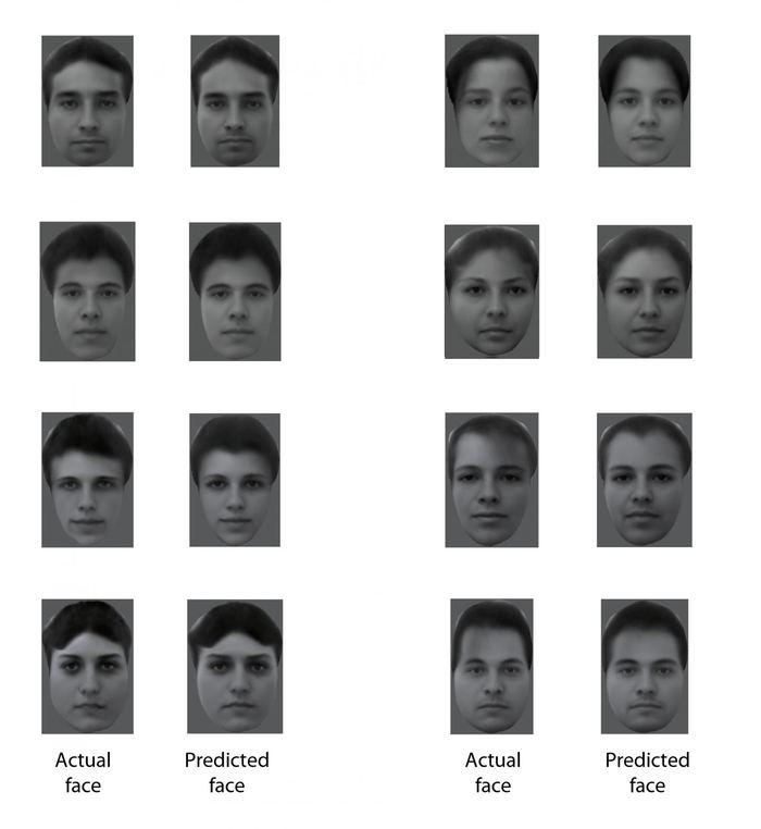 Les visages montrés aux singes et la reconstruction de ces visages à partir des signaux provenant des neurones spécialisés dans le cerveau. Le résultat est remarquable - Crédit : Doris Tsao