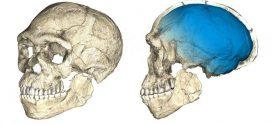 Homo sapiens : Des fossiles datant de 300 000 ans