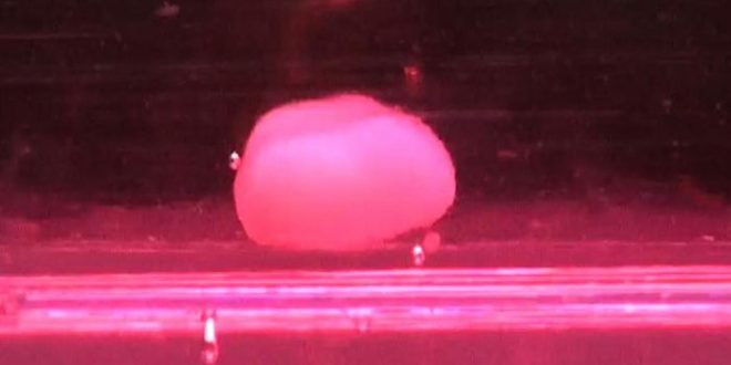 Un foie issu du génie biologique imite le développement naturel