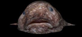 D'étranges créatures sous-marines découvertes en Australie
