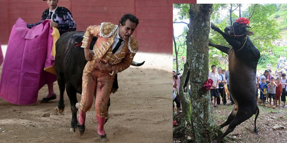 Le taureau qui a tué le torero espagnol Ivan Fandino a été pendu en place publique dans la commune de Irun au nord de l'Espagne