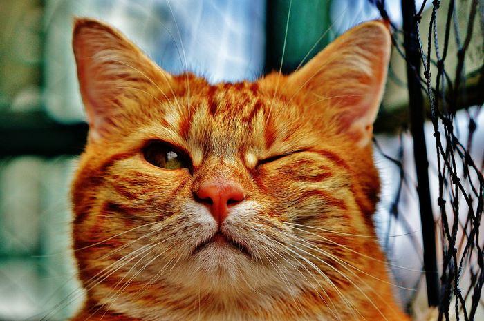 Une analyse ADN révèle que la plupart des chats domestiques actuels proviennent de l'Égypte antique et du Proche-Orient.
