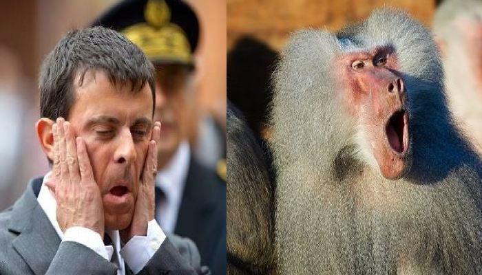 Une étude génomique impliquant des caractéristiques faciales révèlent que Manuel Valls possèdent des caractéristiques génétiques qui sont davantage proches du babouin que de l'Homo Sapiens.