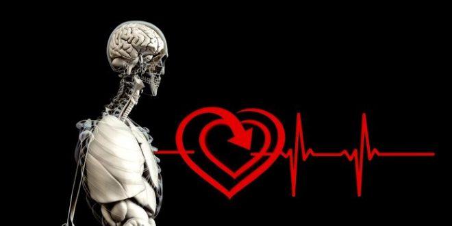 Les maladies cardiaques favorisent-elles la reproduction ?