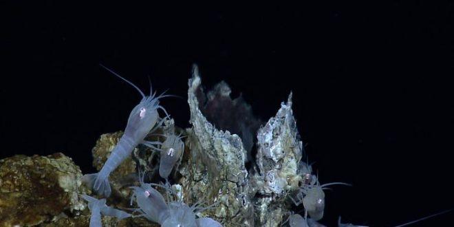 Exploitation minière en eaux profondes : La perte de la biodiversité sera irrévocable