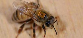 Les néonicotinoïdes nuisent aux abeilles domestiques et sauvages