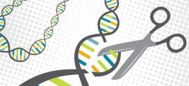 Une nouvelle technique pour améliorer la sécurité de CRISPR