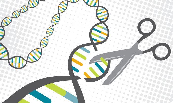 Des chercheurs proposent un équipement et des logiciels afin de réduire les erreurs dans la modification génétique à l'aide l'outil CRISPR.