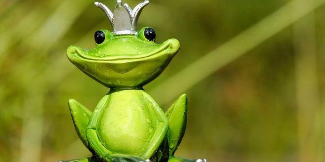 L'extinction des dinosaures a ouvert la voie aux grenouilles