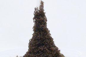 """Une observation suggère que les fourmis peuvent construire des genres de """"Tour Eiffel"""" pour échapper à une menace ou lorsqu'elles sont bloquées."""