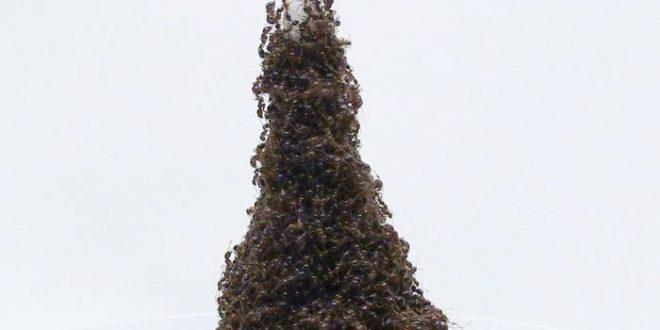 """Eh ! Gustafe ! Même les fourmis construisent des """"Tour Eiffel"""""""