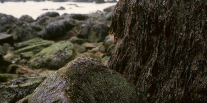 Pourquoi les algues rouges sont-elles si différentes ?
