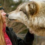 Une recherche estime que les chiens domestiques possèdent des gènes qui les rendent plus sociables envers les humains. C'est le résultat d'une longue domestication canine.