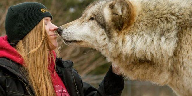 Des gènes impliqués dans la sociabilité des chiens