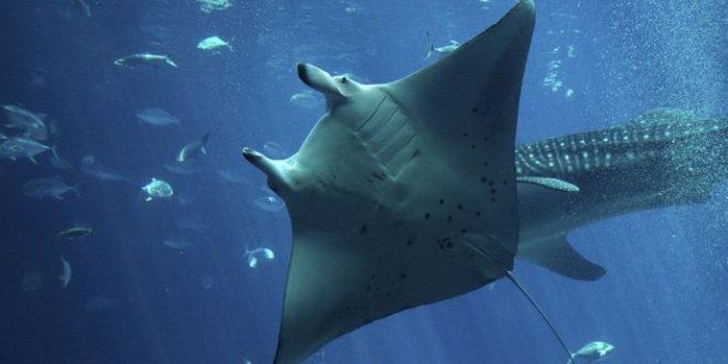Shark Week et SharkFest où quand le requin est le souffre-douleur de la télévision