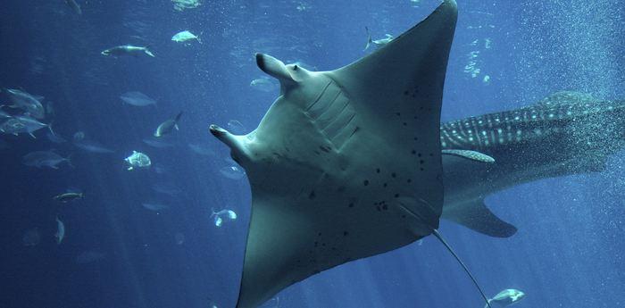 Chaque année, des émissions comme la Shark Week ou la SharkFest nous montrent les requins comme des monstres. Un petit récapitulatif sur le requin s'impose.