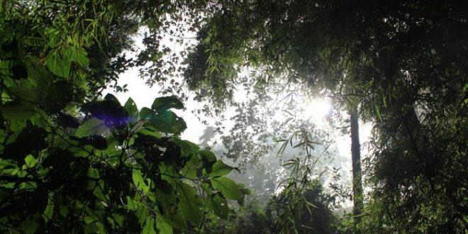 Les humains modifient les forêts tropicales depuis 45 000 ans