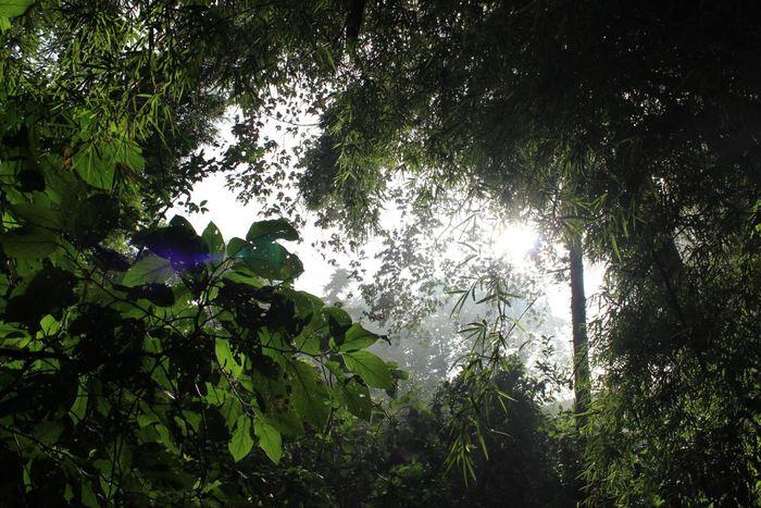 Il faut oublier l'idée qu'il existe des zones sur terre qui n'ont pas été touché par l'homme. Les humains modifient les forêts tropicales depuis 45 000 ans.
