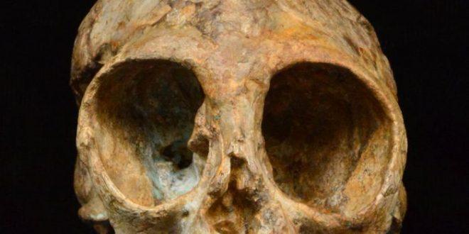 Nyanzapithecus alesi : Un crâne de singe de 13 millions d'années