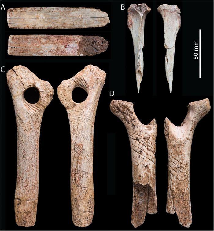Des os humains gravés de la Grotte de Gough - Crédit : Bello et al (2017)