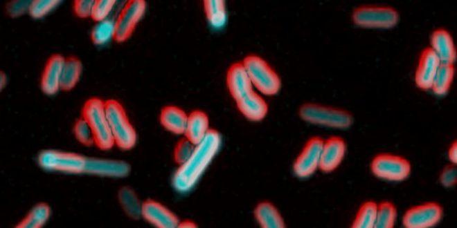Les bactéries peuvent sentir leur environnement