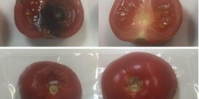 Un emballage d'argile avec des propriétés antibactériennes