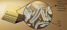 De la photosynthèse dans les bactéries pour créer des produits chimiques