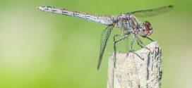 Un insecticide irrésistible pour les moustiques