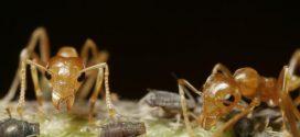 Comment les fourmis fertilisent-elles les plantes ?