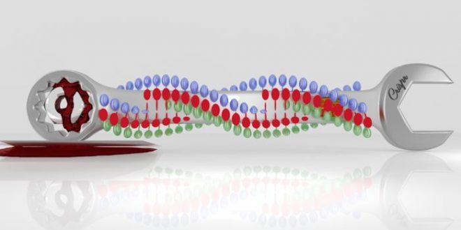 Des doutes sur la modification des embryons humains via CRISPR