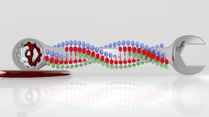 Une étude sur BioRxiv met en doute les résultats d'une étude précédente largement médiatisée sur le fait qu'on avait pu modifier des embryons humains pour corriger des maladies à l'aide de la technologie CRISPR. Selon la nouvelle étude, des mécanismes alternatifs sont possibles pour expliquer les résultats.