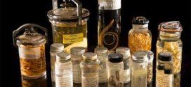 Changement climatique : 30 % des parasites pourraient disparaitre à l'horizon 2070