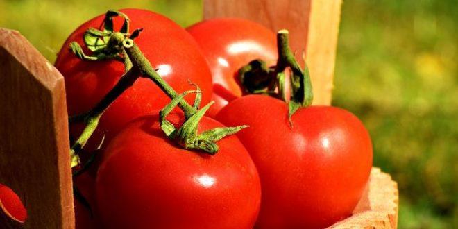 Le CRISPR pour stimuler les rendements agricoles