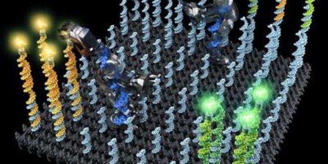 Un robot d'ADN qui peut transporter des molécules