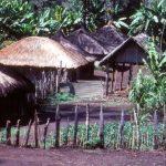 Un village typique Goroka dans les Hautes-Terres orientales en Papouasie-Nouvelle-Guinée - Crédit : Papua New Guinea Institute of Medical Research