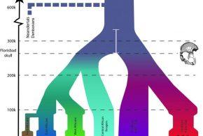 Le modèle démographique de l'histoire africaine et de l'estimation des divergences. Les lignes colorées verticales représentent la migration avec les triangles qui représentent le mélange dans un autre groupe. Les chasseurs-cueilleurs de l'Afrique australe sont montré par des symboles rouges et les agriculteurs de l'Age de Fer sont indiqués par des symboles verts - Crédit : Uppsala University
