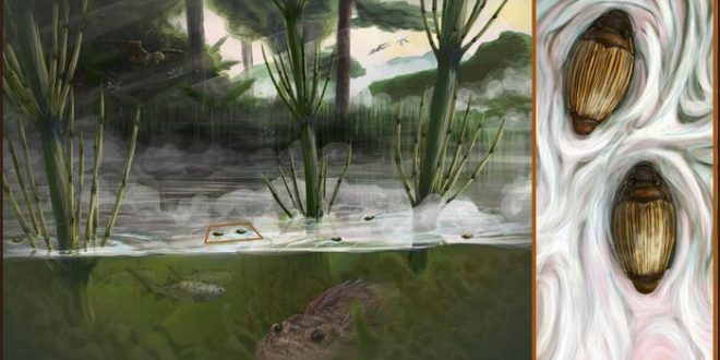 Madagascar : Découverte d'un scarabée dont la lignée remonte à 206 millions d'années