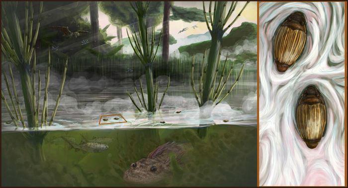 Les chercheurs rapportent la découverte d'un scarabée à rayures connu comme le Heterogyrus milloti. On connaissait déjà cet insecte, mais la nouvelle étude montre que la lignée de ce scarabée remonte à plus de 206 millions d'années et qu'une grande partie a été décimée par l'astéroïde qui a exterminé les dinosaures. L'isolement de Madagascar a permis à cet insecte très rare de survivre, mais son habitant est menacé par l'activité humaine.