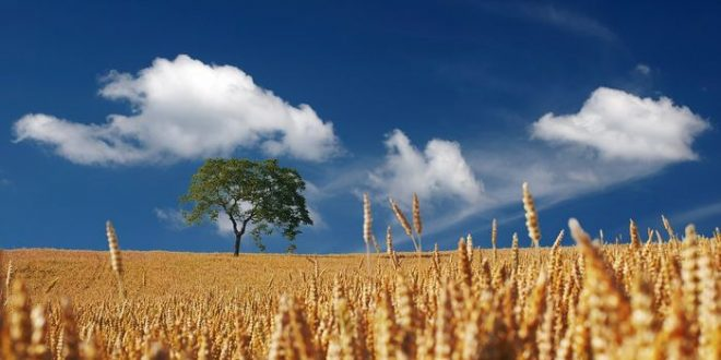 L'Ouganda dit oui aux OGM