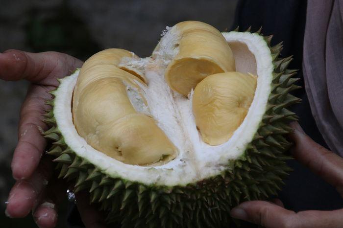 Le Durian est un fruit tropical recouvert de piquants qui est réputé pour son odeur très forte. Très apprécié en Asie en étant surnommé le roi des fruits, des chercheurs de Singapour ont analysé le génome du Durian en découvrant que des odeurs appelées comme les composés sulfurés volatils sont à l'origine de l'odeur particulière de ce fruit.