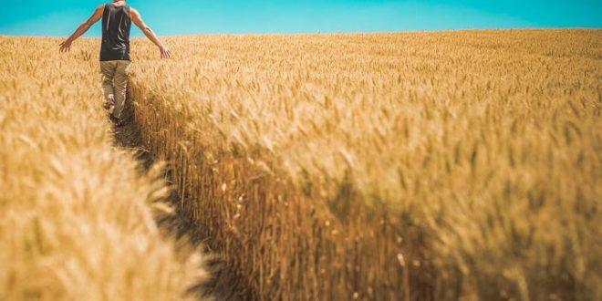 Etat des lieux sur la résistance des insectes dans les cultures OGM