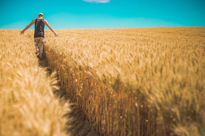 Un papier propose un état des lieux de la résistance des insectes dans les cultures OGM, notamment les semences BT. Le rapport indique que la résistance des insectes augmente, mais que l'utilisation de techniques comme les zones refuges sont très utiles pour retarder l'apparition de cette résistance. Dans l'ensemble, ce rapport estime que la culture OGM doit être une partie intégrante de l'agriculture du futur.