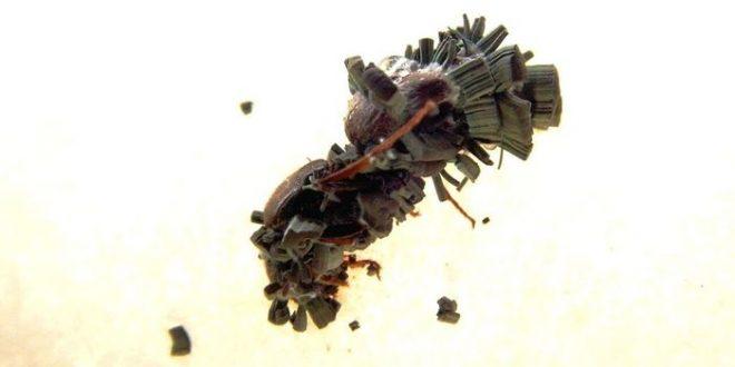 La reine des fourmis enterre les corps pour éviter les infections