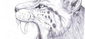 L'ADN éclaire l'histoire du Tigre à dents de sabre