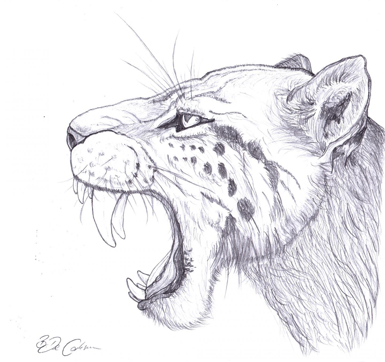 Une illustration de l'Homotherium - Crédit : Binia De Cahsan